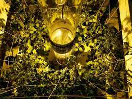 Best 25 Marijuana Grow Lights by Buddha Box 5 X 5 Vertical Grow Tent Kit Review