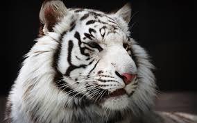 white tiger high river white tiger martial arts high river ab