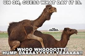 Hump Day Meme Dirty - happy hump day meme images and pics