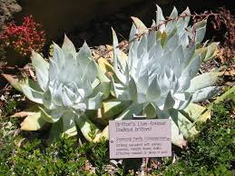 california native plant society blog california native plant pr march 2006