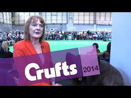 affenpinscher crufts 2014 skye terrier video funnydog tv