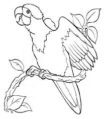 free parrot coloring pagesfree coloring pages kids free