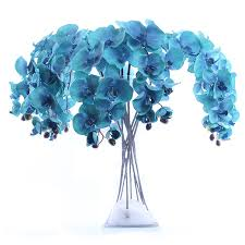 blue orchids for sale blue orchid wholesale orchid suppliers alibaba
