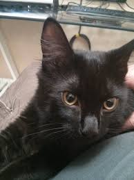 is it bad luck to rescue a black kitten on friday the 13th aww