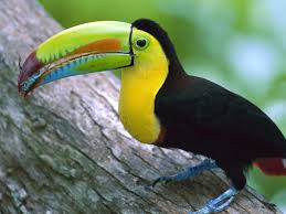 Dominant Plants Of The Tropical Rainforest - toucans are part of the life in a tropical rain forest this would