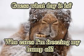 Meme Hump Day - happy hump day my crazy path