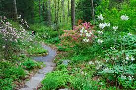 new england wild flower society u0027s garden in the woods mass botanics