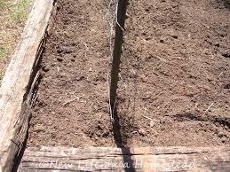 how to plant peas u2022 new life on a homestead homesteading blog