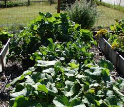 Starting An Organic Vegetable Garden by How To Start Gardening Growing Organic Vegetables How To