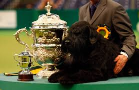 affenpinscher crufts 2016 cruft winners mirror online
