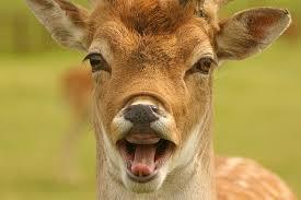Funny Deer Memes - 10 best deer memes sweeney feeders