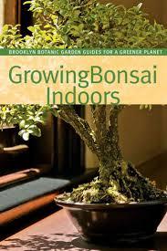 bonsai saule pleureur 1000 images about bonsai on pinterest trees bonsai trees and
