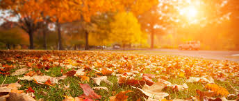 leaf removal necessary or not lawn and lawn care