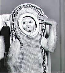 space animals chimps monkeys u0026 dogs who became u0027astronauts
