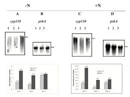 alkane induced expression substrate binding profile and