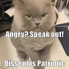 Angry Cat Meme - lolcats angry lol at funny cat memes funny cat pictures with