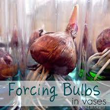 25 beautiful bulbs ideas on planting bulbs
