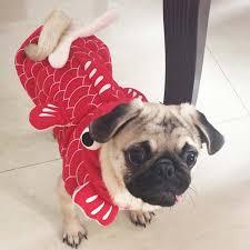 Yorkie Costumes Halloween Aliexpress Buy Funny Halloween Pet Cat Dog Fish Goldfish
