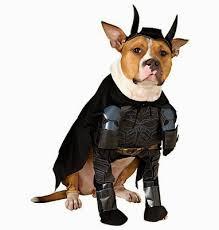 Batman Dark Knight Halloween Costume 10 Halloween Dog Costumes
