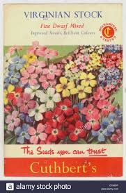 vintage seed packets vintage seed packet cuthbert s virginian stock mixed