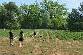 crop hits a u201clull u201d this week may 23 2014 nc state extension