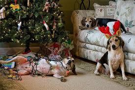 dog christmas 5 smart ways to dog proof your christmas tree barkpost