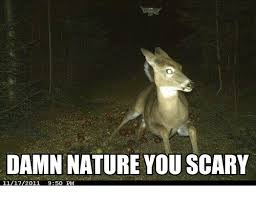 Damn Nature You Scary Meme - damn nature you scary 11172011 950 pm meme on me me