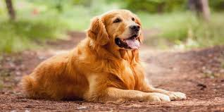 top 10 greatest television dogs of all time