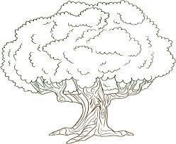trees coloring pages wallpaper download cucumberpress com
