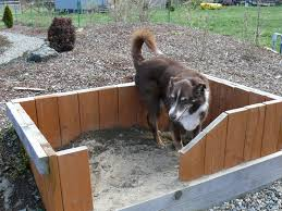 digging dog create a sandbox just for his digging i like the