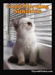 Good Morning Sunshine Meme - list of synonyms and antonyms of the word hello sunshine meme