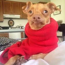 Tuna The Dog Meme - most people wouldn t own a dog that looks like this but i think