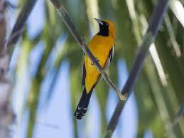 san diego native plants list san diego birding birding california and beyond with gary nunn