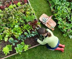 unusual garden ideas home garden ideas acehighwine com