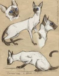 siamese cats susie perring my two siamese keiki and ramses
