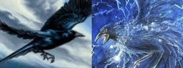 Storm Crow Meme - storm crow meme archives kayak wallpaper