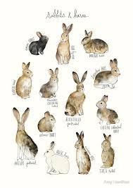 rabbit rabbit 4676 best lapin bunny hare images on bunnies easter