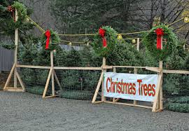real christmas trees for sale christmas tree sales kiwanis fwb