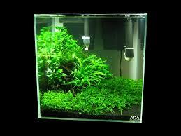 flame moss aquarium ideas pinterest aquascaping