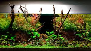 best fish for 10 gallon fish tank setup which fish you should choose