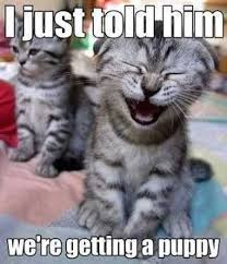 Funny Smile Meme - 37 funny animal pics that will make you smile