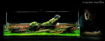 Aquascape Tank Crimson Sky Aquascape By James Findley Journal The Green Machine