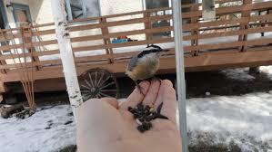 Birds In Your Backyard Interview With Young Manitoba Birder Josiah Bird Canada