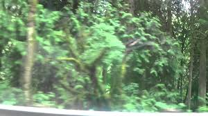 Treehouse Point Wa - visting pete nelson u0027s treehouse point washington vlog youtube