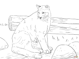 mountain lion coloring page funycoloring