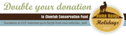 let ccf mail your cards cheetah conservation fund