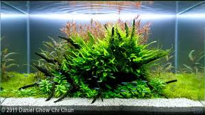 Aquascaping Plants The Jungle Style Planted Tank Aquascape Awards