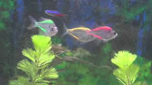 painted glass fish the shocking truth youtube