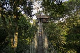 Above The Canopy by Canopy Tree House Reserva Amazonica