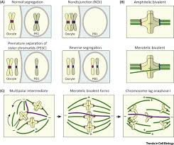 mechanisms of aneuploidy in human eggs trends in cell biology